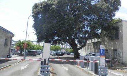 Le chêne doit être abattu : pas de parking longue durée à la gare pendant cinq jours