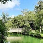 Une plongée dans l'histoire des plantes à La Rochelle