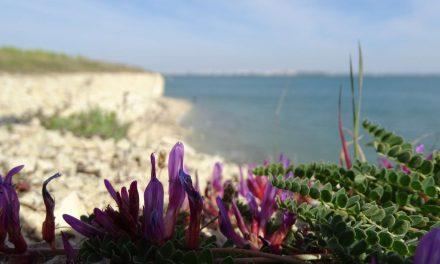 Vos plus belles photos de Charente-Maritime dans La Rochelle Info
